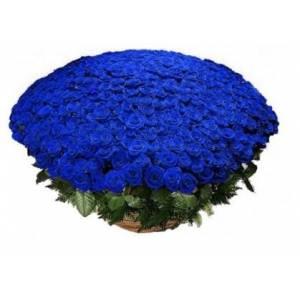Большая корзина синих роз, 301 шт. R924